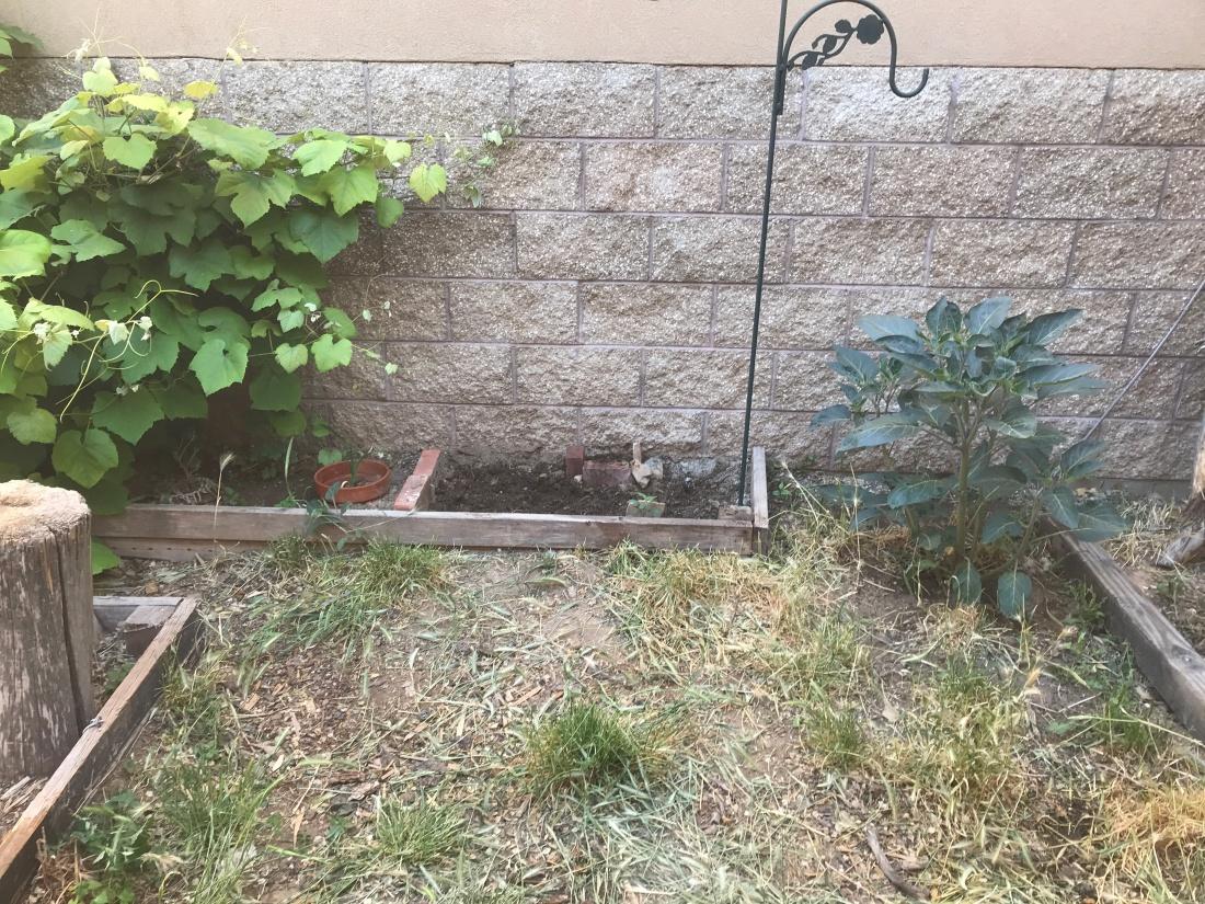 backyard growth1